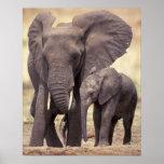 África, Tanzania, parque nacional de Tarangire. 2 Impresiones
