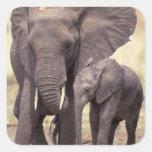 África, Tanzania, parque nacional de Tarangire. 2 Calcomanías Cuadradases