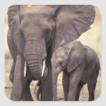 África, Tanzania, parque nacional de Tarangire. 2 Pegatina Cuadrada