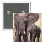 África, Tanzania, parque nacional de Tarangire. 2 Pin Cuadrado