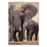 África, Tanzania, parque nacional de Tarangire. 2 Tarjeta
