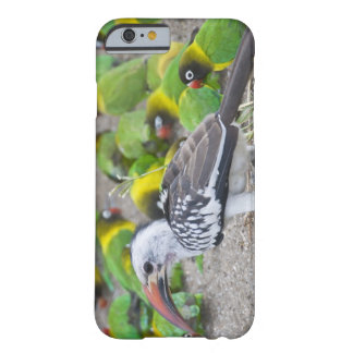 Africa. Tanzania. Red-billed Hornbill and Barely There iPhone 6 Case