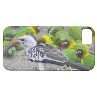 Africa. Tanzania. Red-billed Hornbill and iPhone SE/5/5s Case