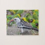 Africa. Tanzania. Red-billed Hornbill and Jigsaw Puzzles