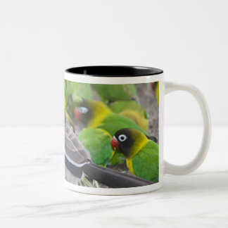Africa. Tanzania. Red-billed Hornbill and Two-Tone Coffee Mug