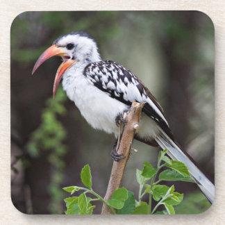 Africa, Tanzania, Red-billed Hornbill (Tockus Beverage Coaster