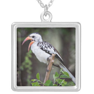 Africa, Tanzania, Red-billed Hornbill (Tockus Square Pendant Necklace