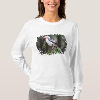 Africa, Tanzania, Red-billed Hornbill (Tockus T-Shirt