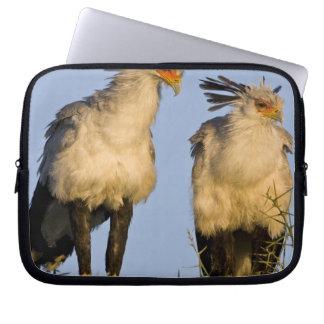 Africa. Tanzania. Secretary Birds at Ndutu in Laptop Sleeve