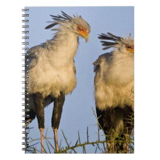 Africa. Tanzania. Secretary Birds at Ndutu in Notebook