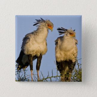 Africa. Tanzania. Secretary Birds at Ndutu in Pinback Button