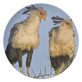 Africa. Tanzania. Secretary Birds at Ndutu in Plate