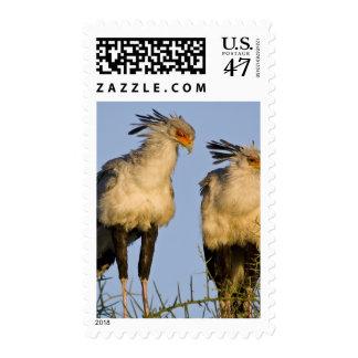 Africa. Tanzania. Secretary Birds at Ndutu in Postage