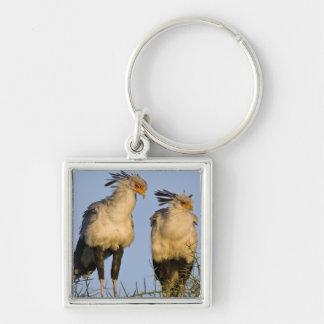 Africa. Tanzania. Secretary Birds at Ndutu in Silver-Colored Square Keychain