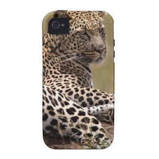 Africa, Tanzania, Serengeti. Leopard iPhone 4 Cases