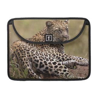Africa, Tanzania, Serengeti. Leopard Sleeve For MacBook Pro