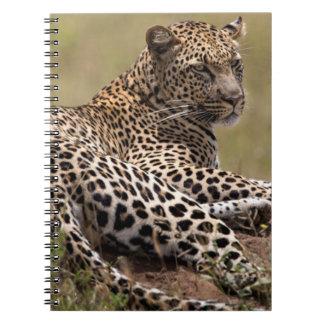 Africa, Tanzania, Serengeti. Leopard Notebook