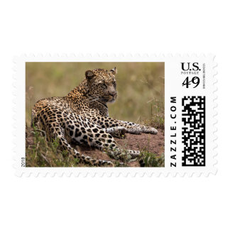 África, Tanzania, Serengeti. Leopardo Franqueo