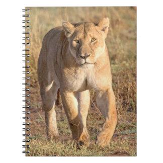 Africa, Tanzania, Serengeti. Lion And Lioness Notebook