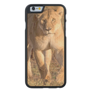 Africa, Tanzania, Serengeti. Lion And Lioness Carved® Maple iPhone 6 Slim Case