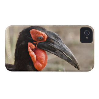 Africa, Tanzania, Southern Ground Hornbill iPhone 4 Cover