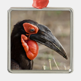 Africa, Tanzania, Southern Ground Hornbill Metal Ornament