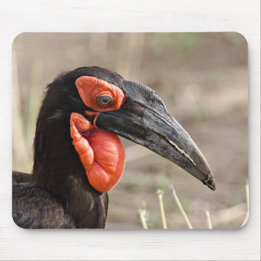 Africa, Tanzania, Southern Ground Hornbill Mouse Pad