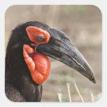 Africa, Tanzania, Southern Ground Hornbill Stickers