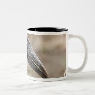 Africa, Tanzania, Southern Ground Hornbill Two-Tone Coffee Mug