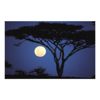 África Tanzania Tarangire Árbol del acacia aden Impresión Fotográfica