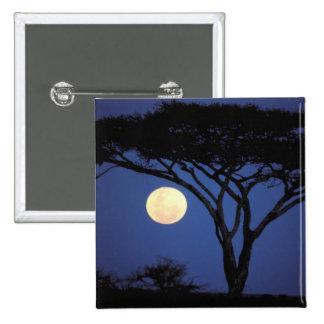 África, Tanzania, Tarangire. Árbol del acacia aden Pin Cuadrado
