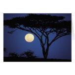 África, Tanzania, Tarangire. Árbol del acacia aden Tarjeta De Felicitación