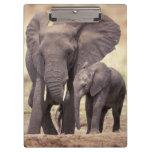Africa, Tanzania, Tarangire National Park. 2 Clipboard
