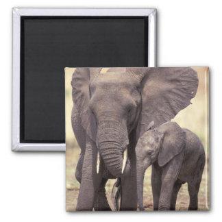 Africa, Tanzania, Tarangire National Park. 2 Magnet