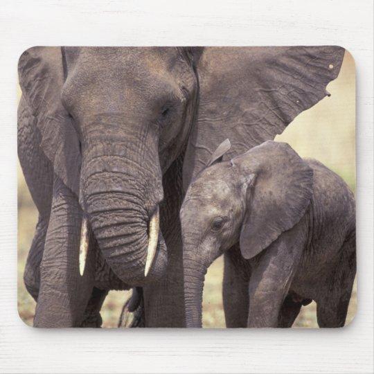 Africa, Tanzania, Tarangire National Park. 2 Mouse Pad