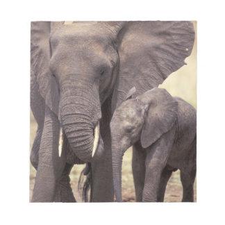 Africa, Tanzania, Tarangire National Park. 2 Memo Pad