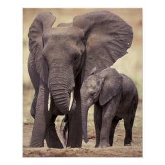 Africa, Tanzania, Tarangire National Park. 2 Poster