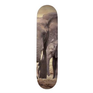 Africa, Tanzania, Tarangire National Park. 2 Skateboards