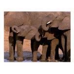 Africa, Tanzania, Tarangire National Park. Post Card
