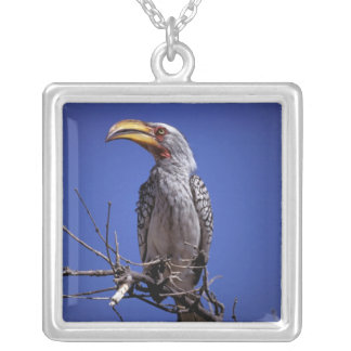 Africa, Tanzania, Tarangire. Yellow-billed Silver Plated Necklace
