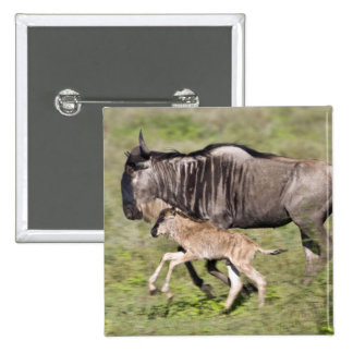 Africa. Tanzania. Wildebeest mother and baby at 2 Inch Square Button