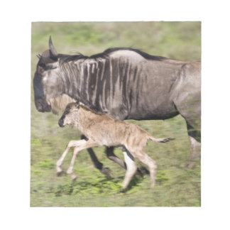 Africa. Tanzania. Wildebeest mother and baby at Notepad