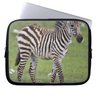 Africa. Tanzania. Zebra colt at Ngorongoro 2 Laptop Sleeves