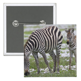 Africa. Tanzania. Zebra mother and colt at Pin