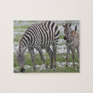 Africa. Tanzania. Zebra mother and colt at Puzzles