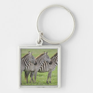 Africa. Tanzania. Zebras at Ngorongoro Crater in Keychain