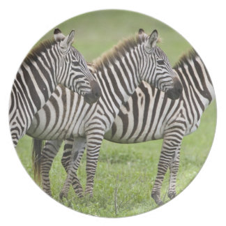 Africa. Tanzania. Zebras at Ngorongoro Crater in Melamine Plate