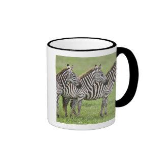 Africa. Tanzania. Zebras at Ngorongoro Crater in Coffee Mugs