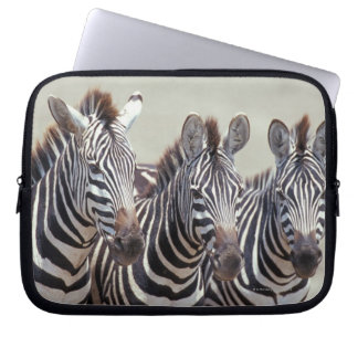 Africa, Tanzania, zebras Computer Sleeve