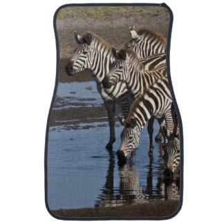 Africa. Tanzania. Zebras drinking at Ndutu in Car Floor Mat
